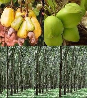 farmers cash crops
