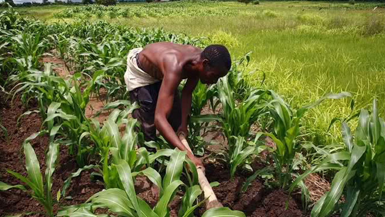 Inspiring: AFDB set up 'Farming is Cool' competition for Nigerian school children
